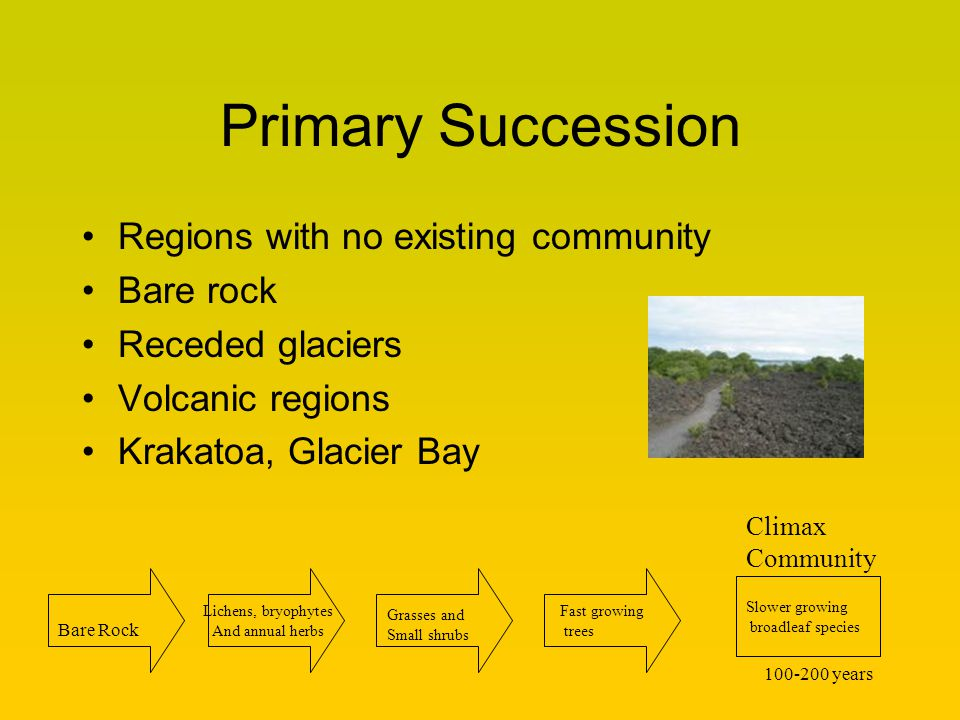 Primary Succession Regions with no existing community Bare rock