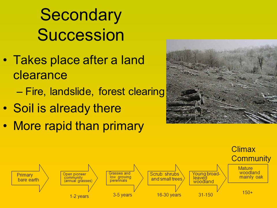Secondary Succession Takes place after a land clearance