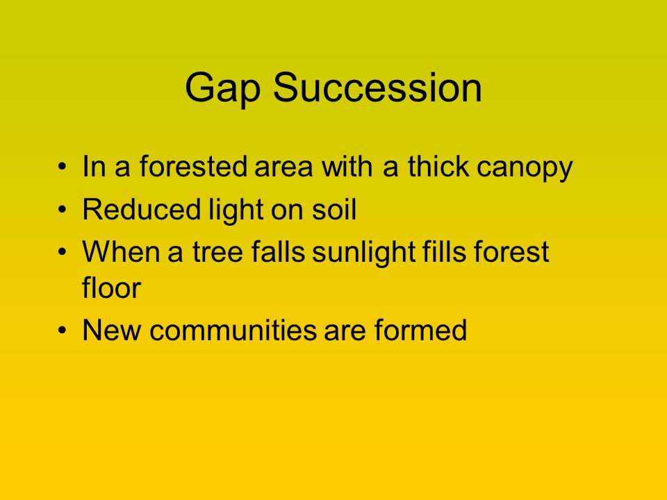 Gap Succession In a forested area with a thick canopy