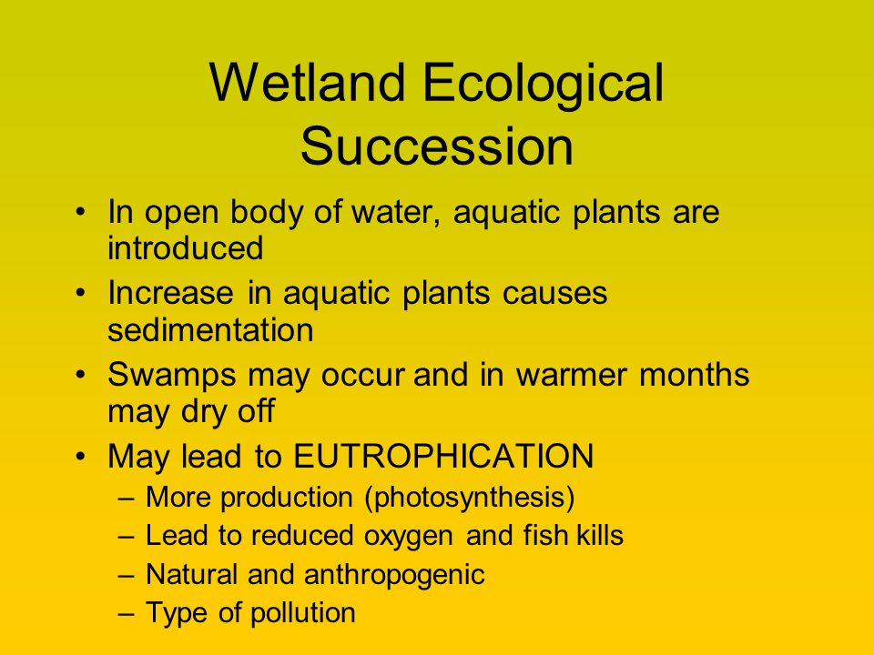 Wetland Ecological Succession