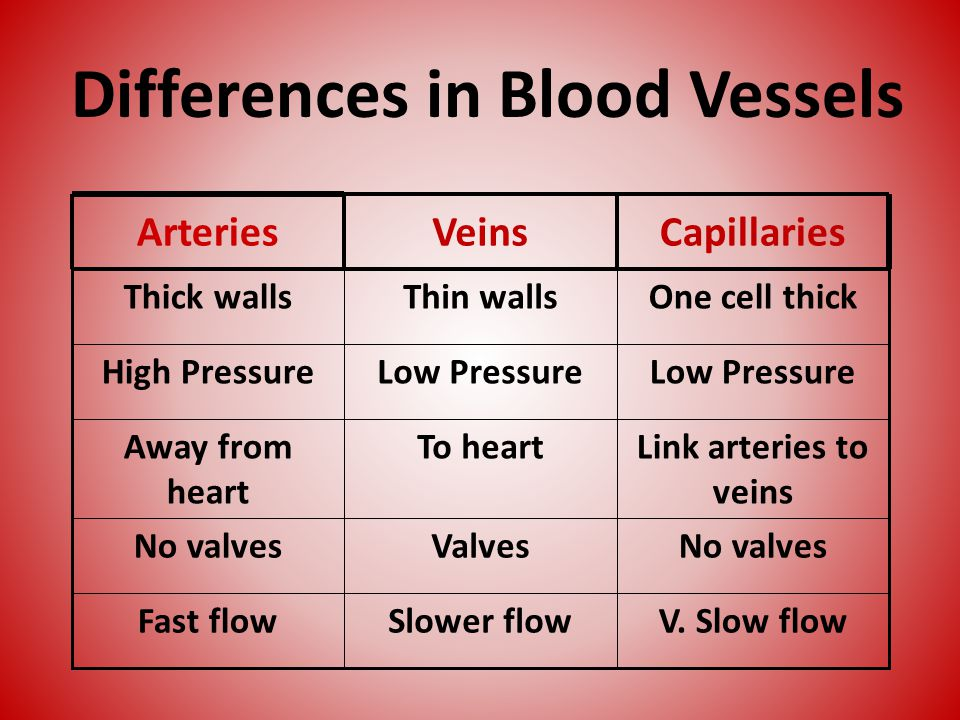 Differences in Blood Vessels