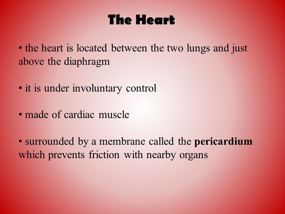 The Heart the heart is located between the two lungs and just above the diaphragm. it is under involuntary control.