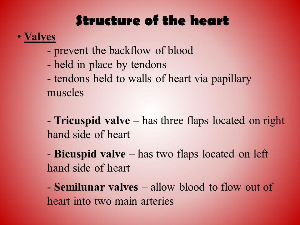 Structure of the heart Valves - prevent the backflow of blood
