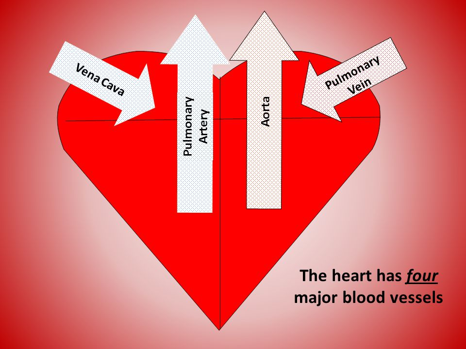 The heart has four major blood vessels