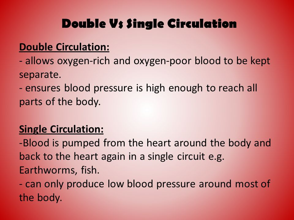 Double Vs Single Circulation