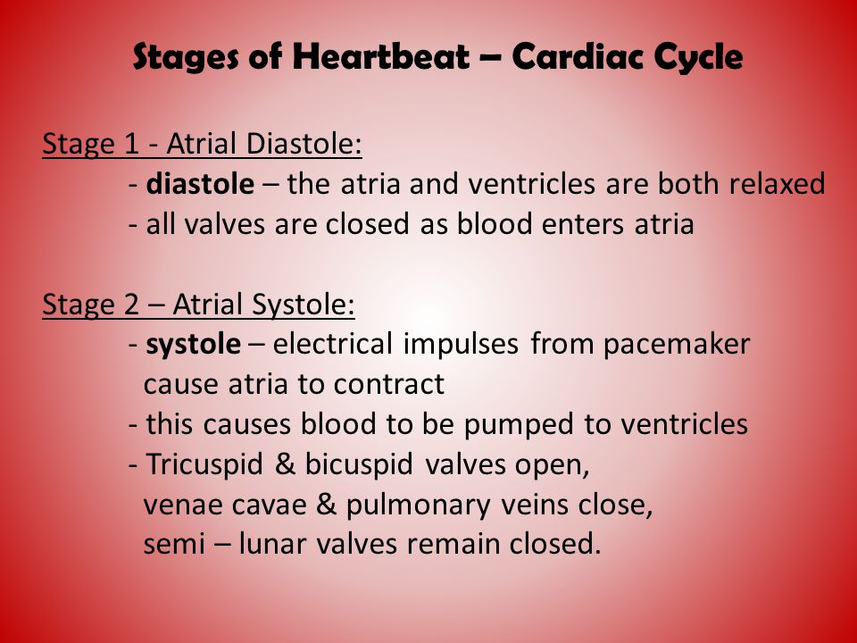 Stages of Heartbeat – Cardiac Cycle