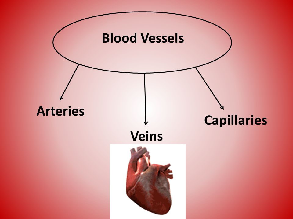 Blood Vessels Arteries Capillaries Veins