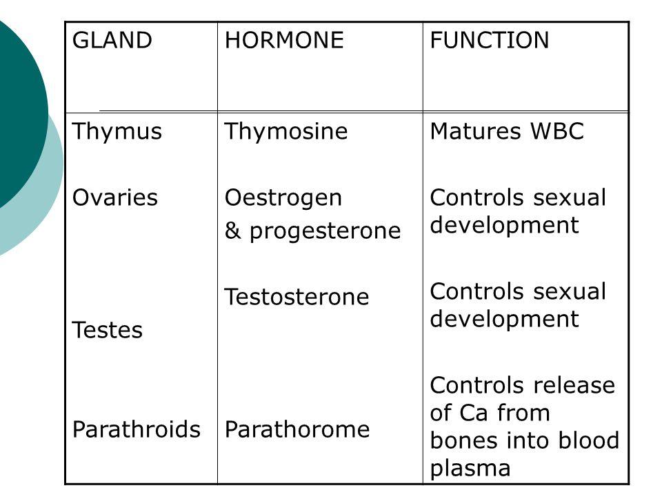 GLAND HORMONE. FUNCTION. Thymus. Ovaries. Testes. Parathroids. Thymosine. Oestrogen. & progesterone.