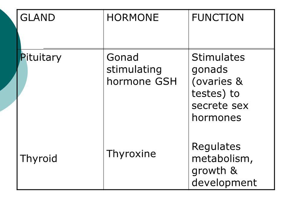 GLAND HORMONE. FUNCTION. Pituitary. Thyroid. Gonad stimulating hormone GSH. Thyroxine.