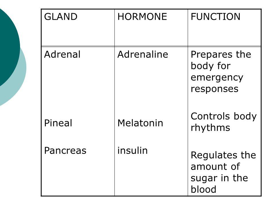 GLAND HORMONE. FUNCTION. Adrenal. Pineal. Pancreas. Adrenaline. Melatonin. insulin. Prepares the body for emergency responses.