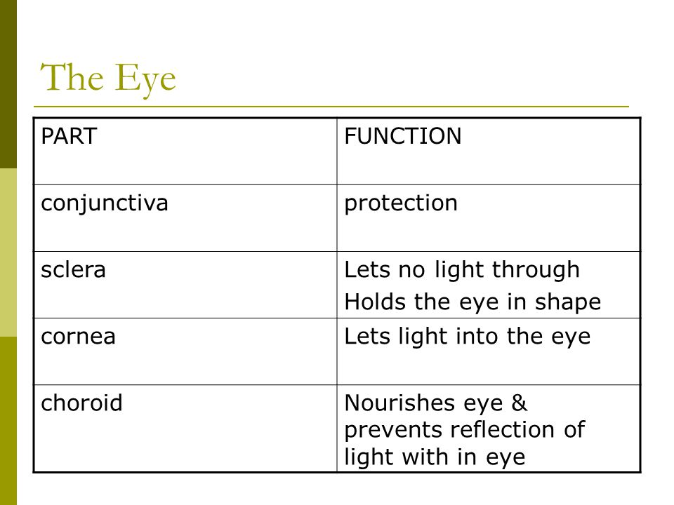 The Eye PART FUNCTION conjunctiva protection sclera