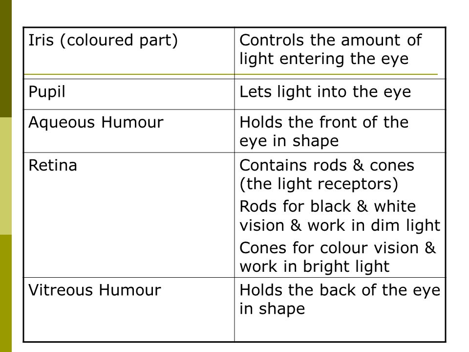 Iris (coloured part) Controls the amount of light entering the eye. Pupil. Lets light into the eye.