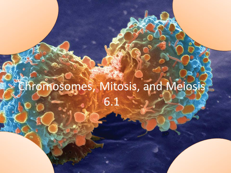 Chromosomes, Mitosis, and Meiosis 6.1