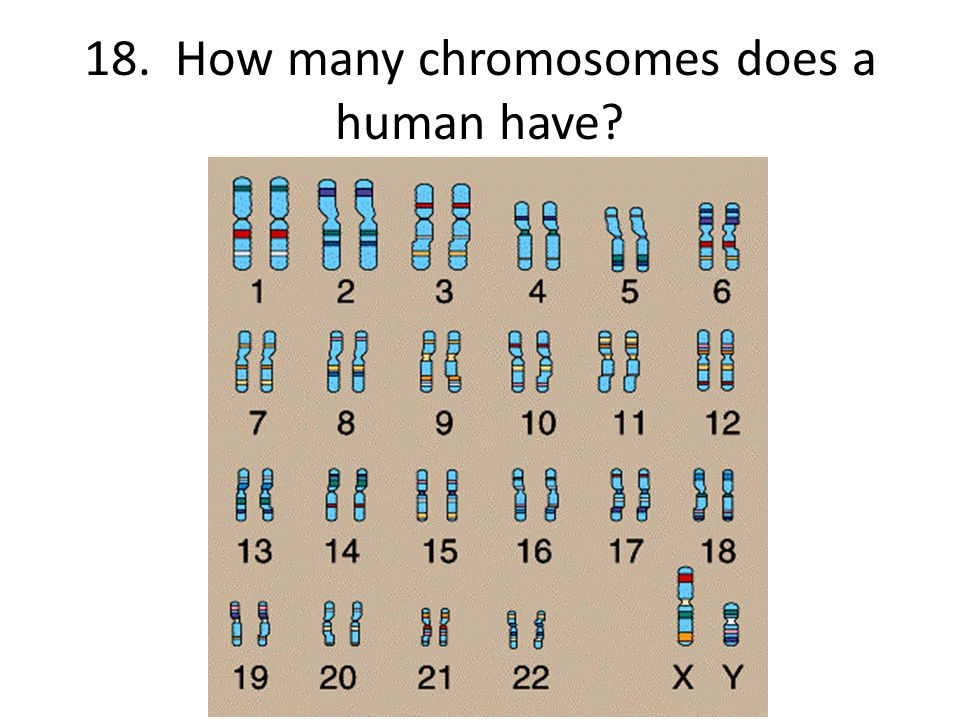 18. How many chromosomes does a human have