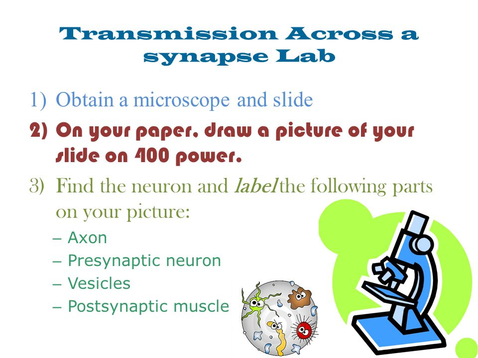 Transmission Across a synapse Lab