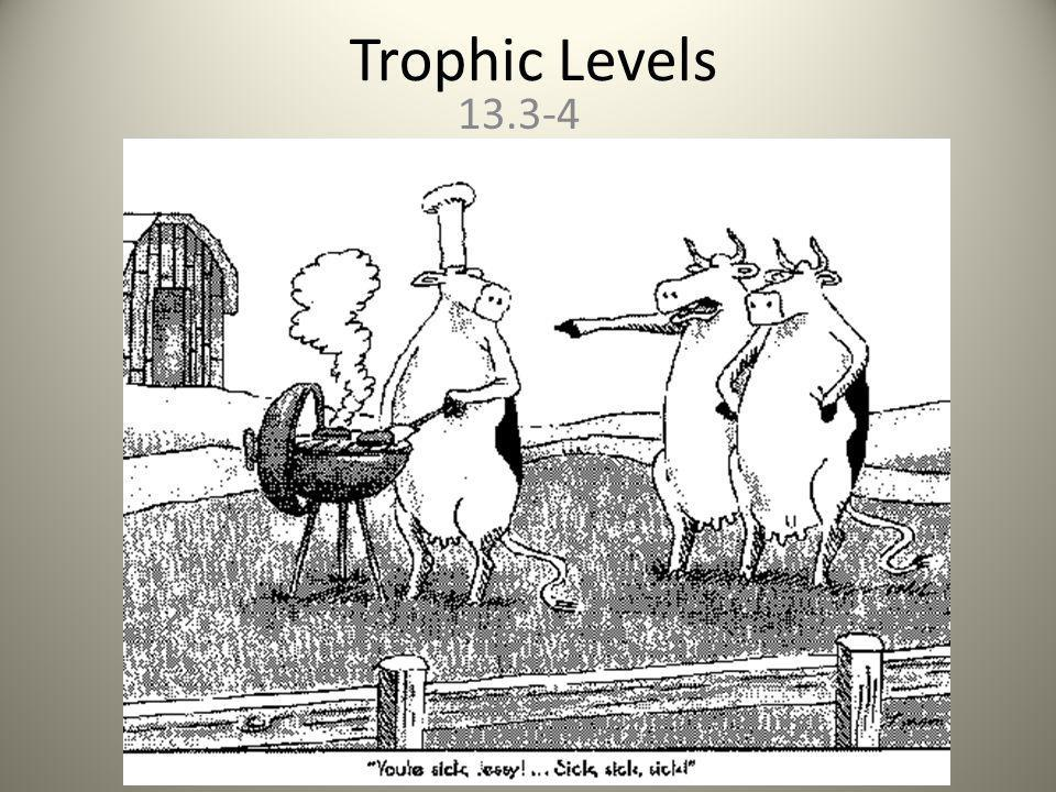 Trophic Levels 13.3-4
