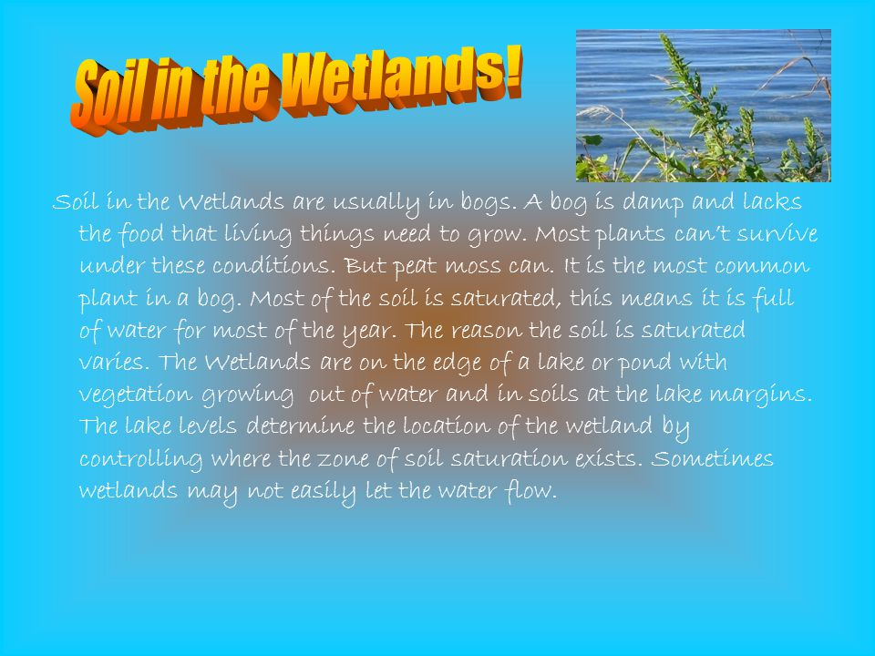 Soil in the Wetlands!