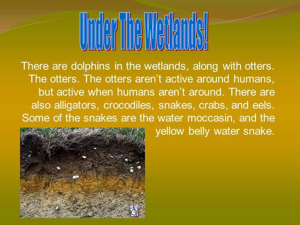 Under The Wetlands!