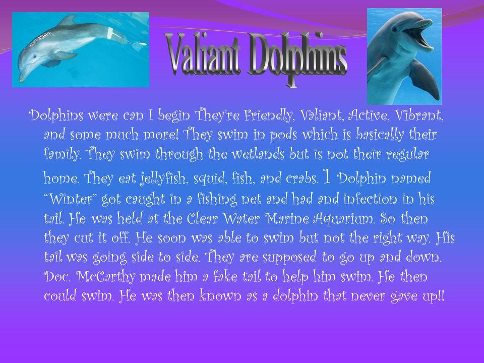 Valiant Dolphins