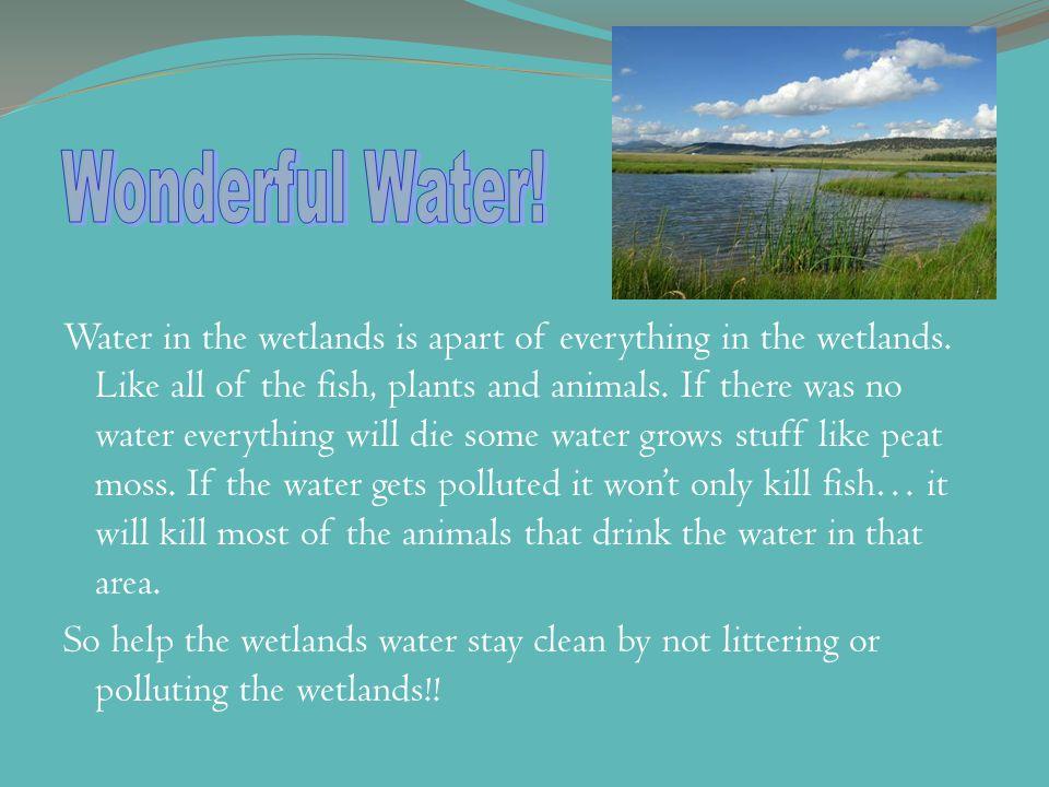Wonderful Water!