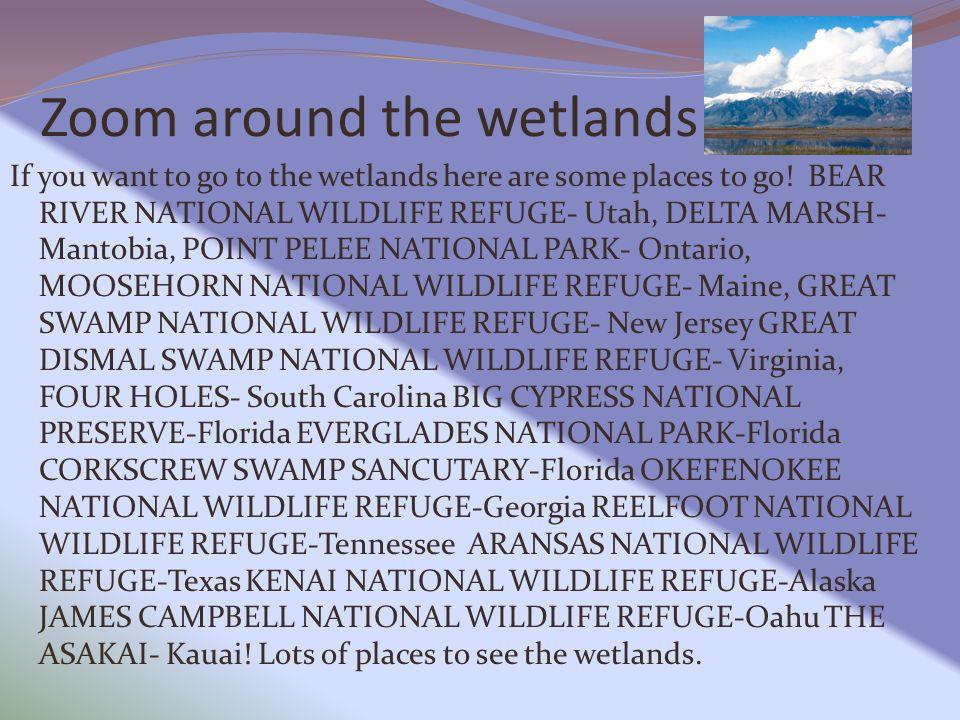 Zoom around the wetlands
