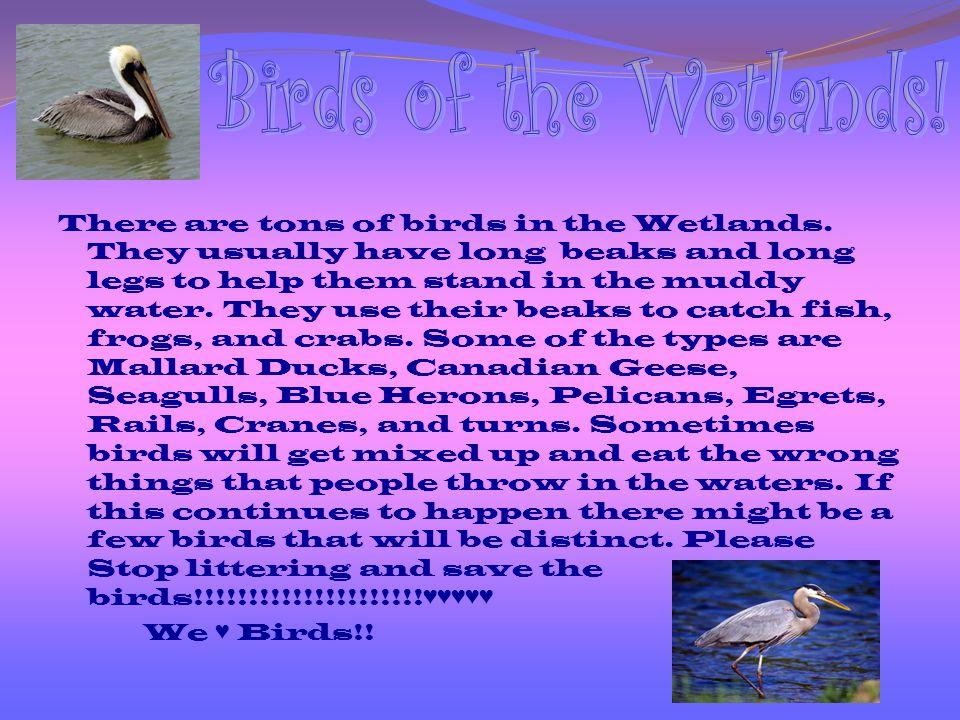 Birds of the Wetlands!
