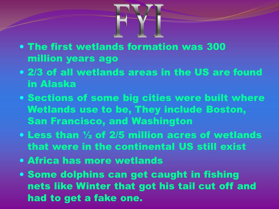 FYI The first wetlands formation was 300 million years ago