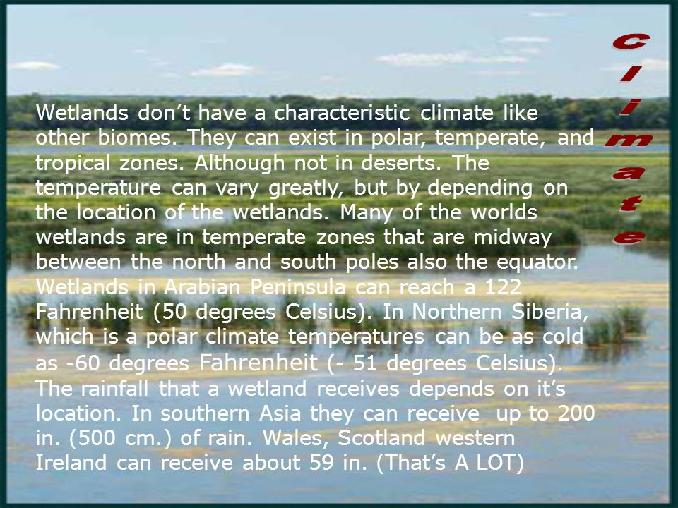 Wetlands don't have a characteristic climate like other biomes