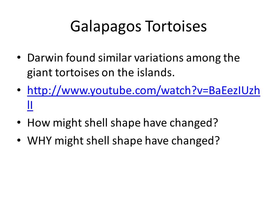 Galapagos Tortoises Darwin found similar variations among the giant tortoises on the islands. http://www.youtube.com/watch v=BaEezIUzhlI.