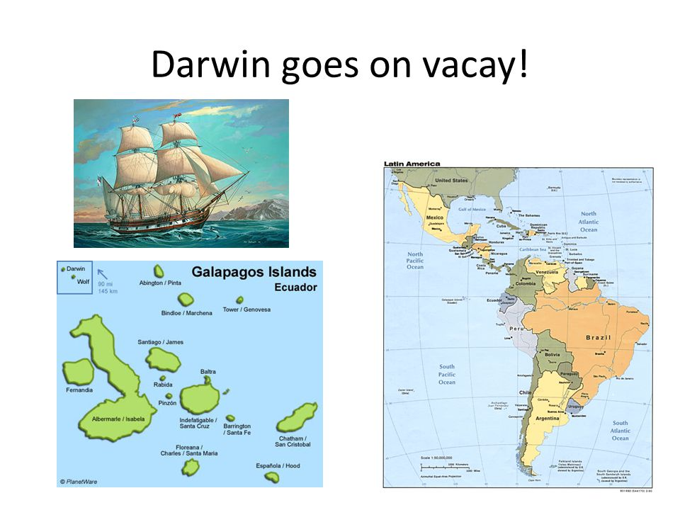 Darwin goes on vacay!