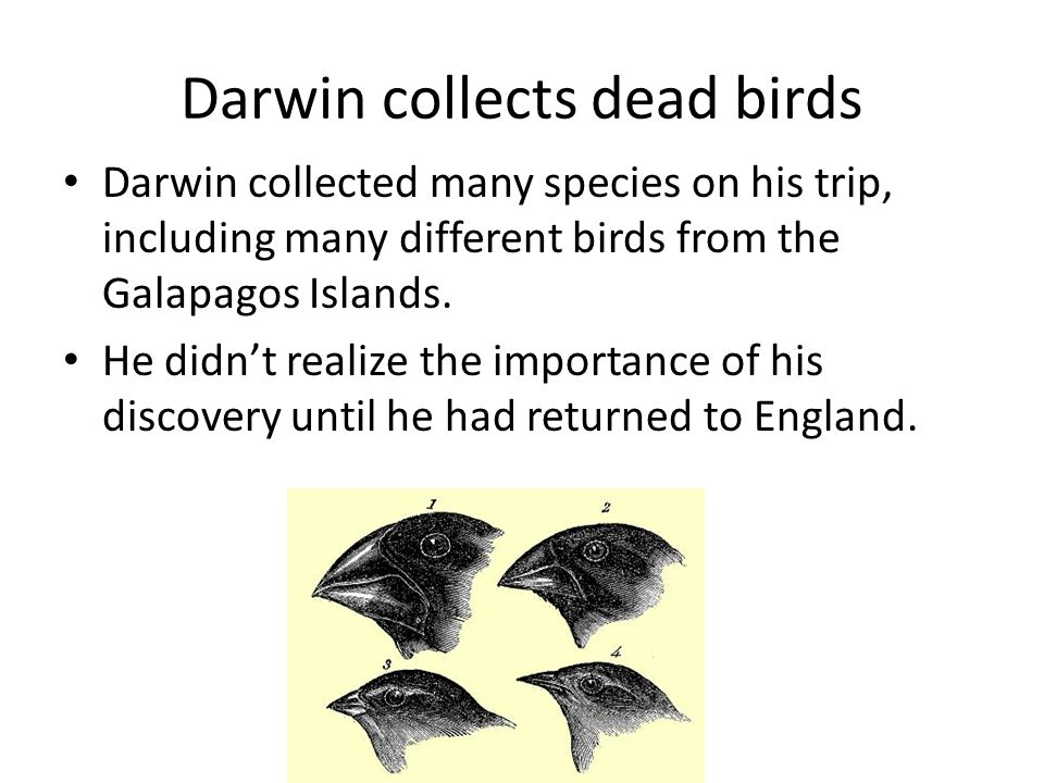 Darwin collects dead birds