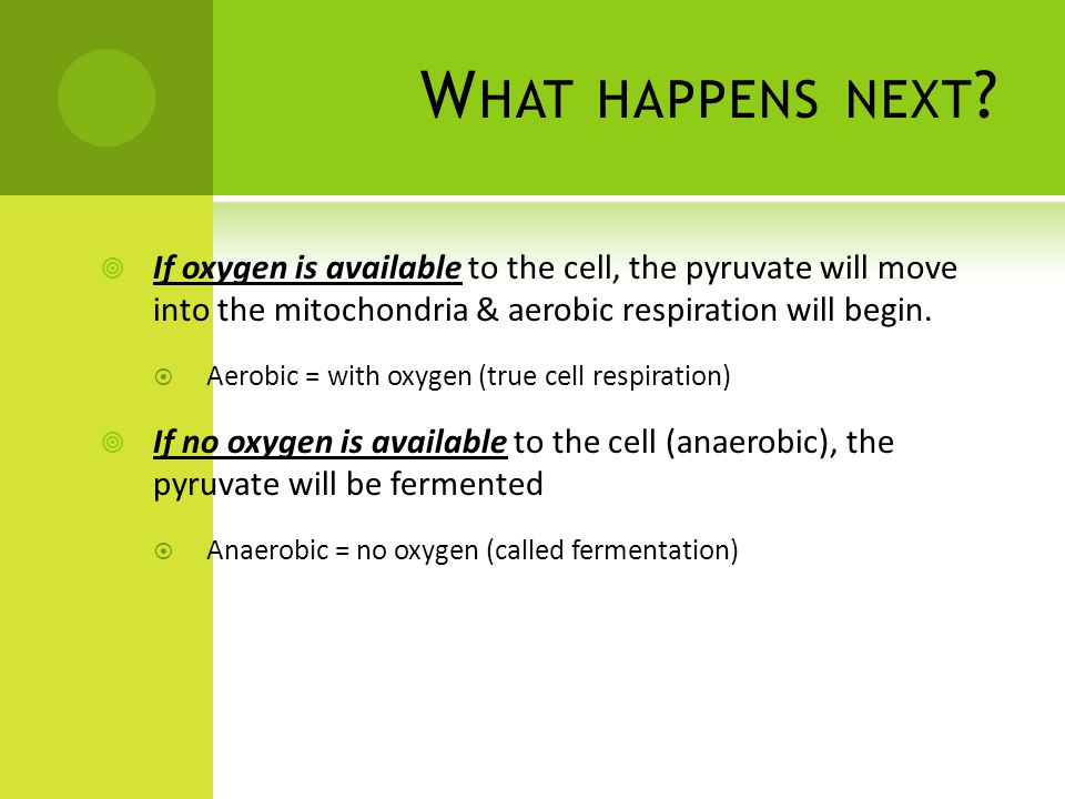 What happens next If oxygen is available to the cell, the pyruvate will move into the mitochondria & aerobic respiration will begin.