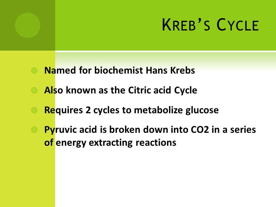Kreb's Cycle Named for biochemist Hans Krebs