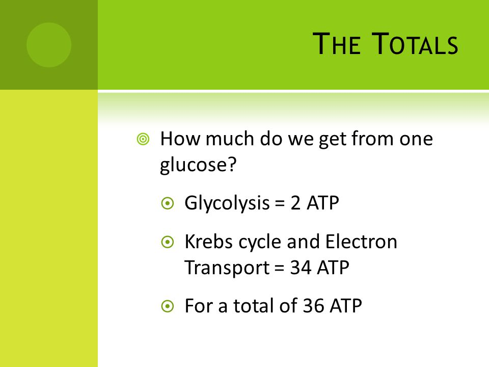 The Totals How much do we get from one glucose Glycolysis = 2 ATP