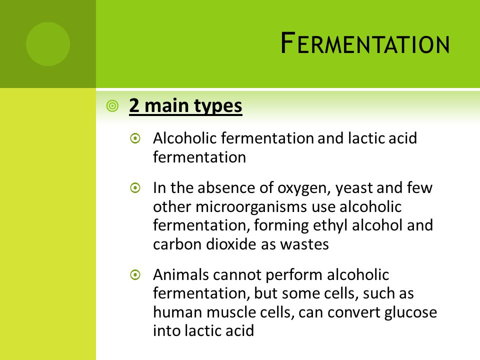 Fermentation 2 main types