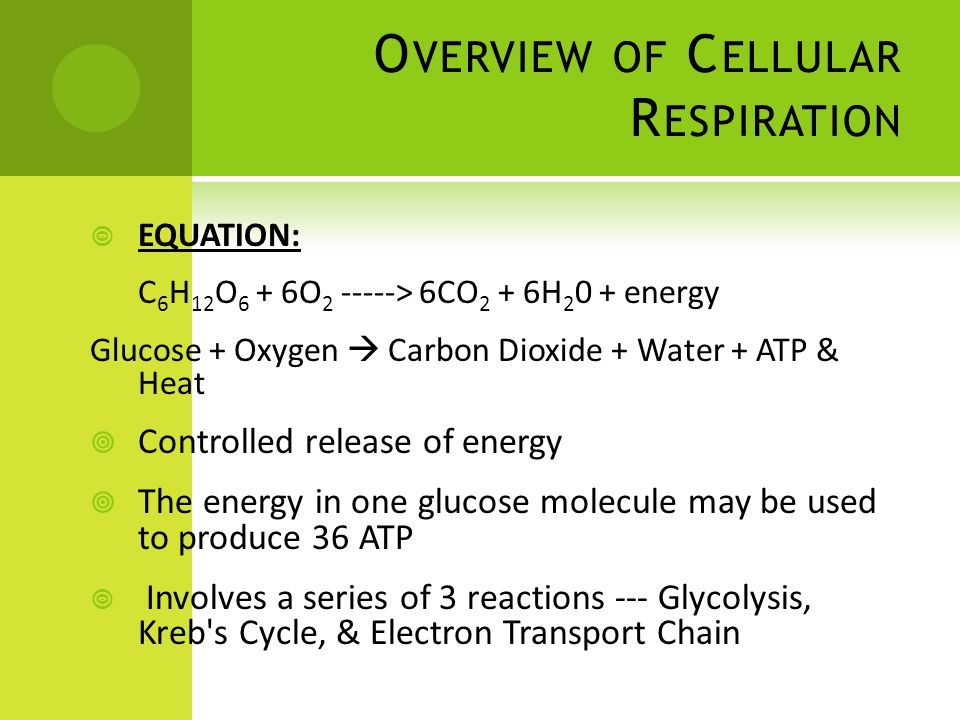 Photosynthesis Review and Cellular Respiration Overview - ppt download