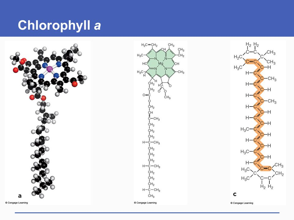 Chlorophyll a
