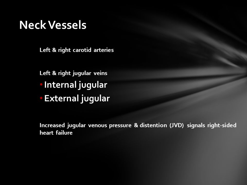 Neck Vessels Internal jugular External jugular