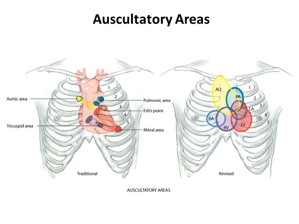 Auscultatory Areas