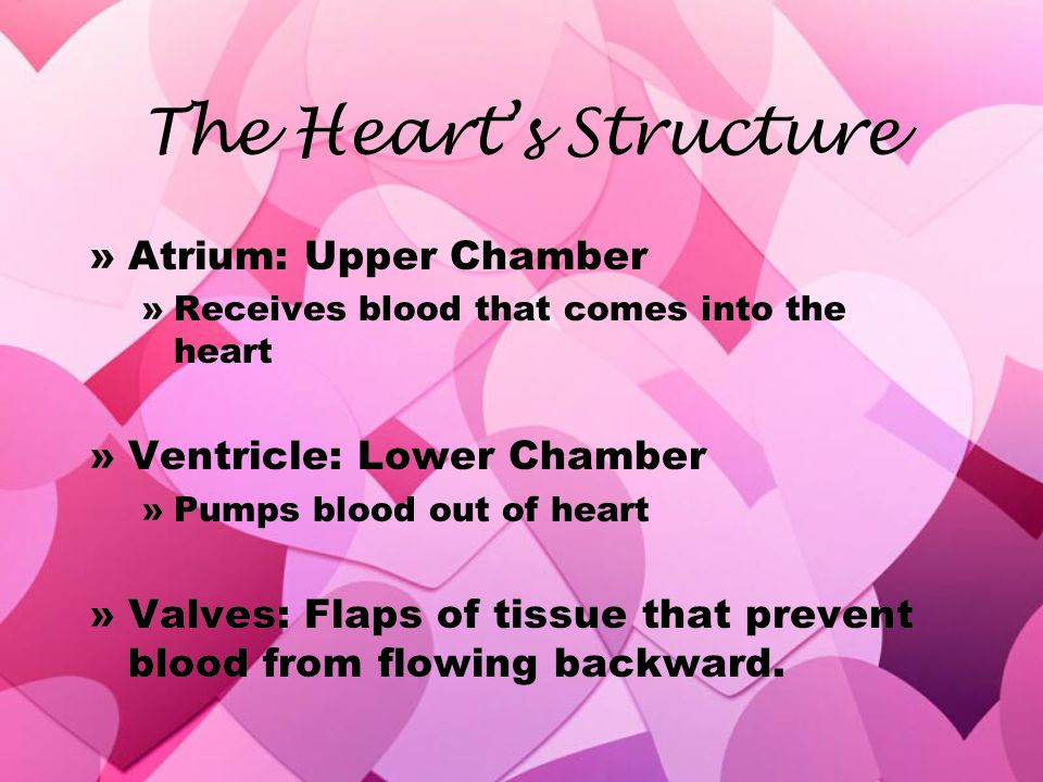 The Heart's Structure Atrium: Upper Chamber Ventricle: Lower Chamber