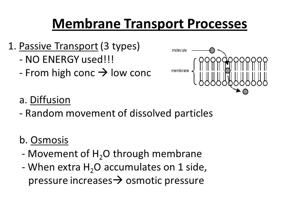 Membrane Transport Processes