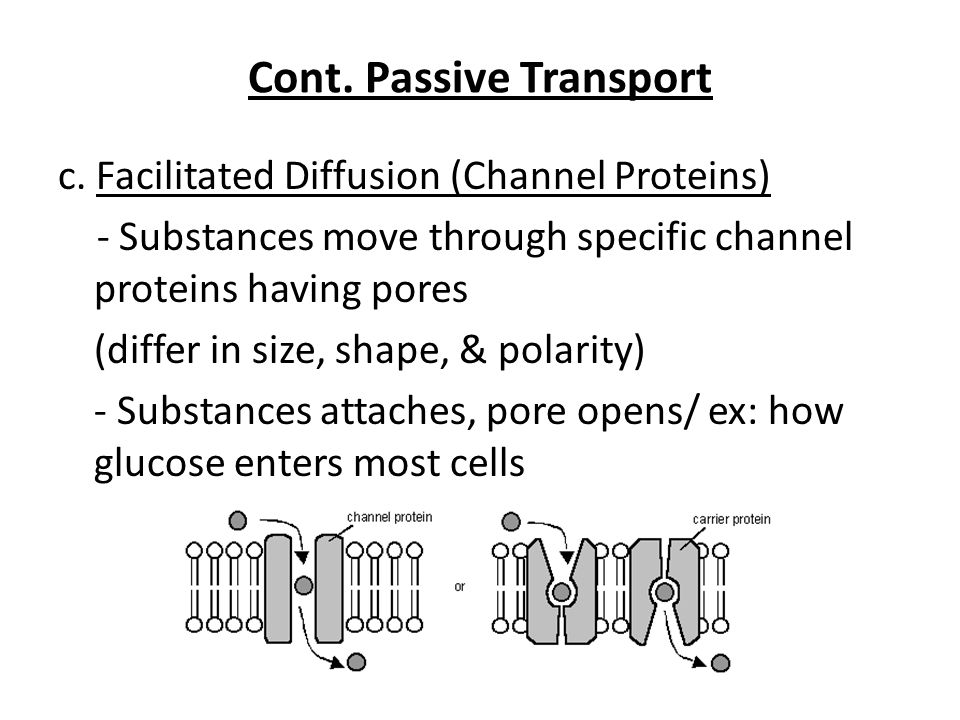 Cont. Passive Transport