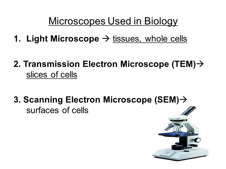 Microscopes Used in Biology