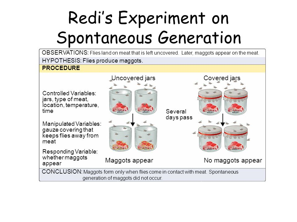 Redi's Experiment on Spontaneous Generation