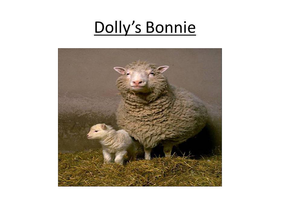 Dolly's Bonnie