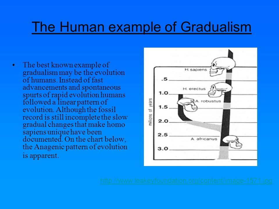 The Human example of Gradualism