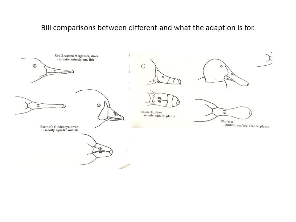 Bill comparisons between different and what the adaption is for.