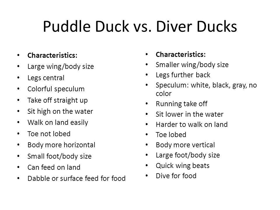 Puddle Duck vs. Diver Ducks