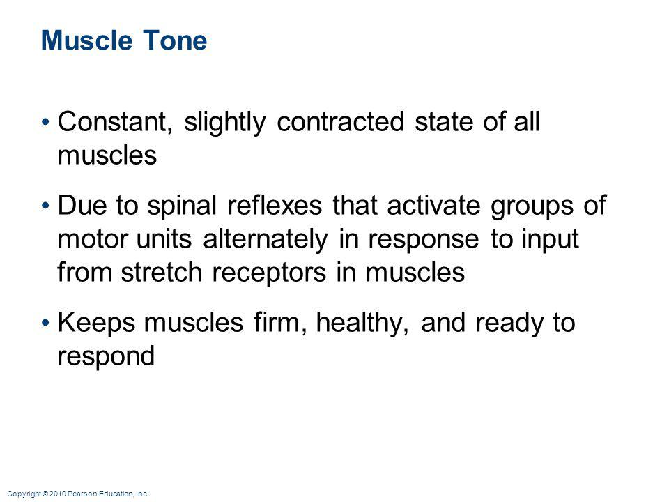 Muscle Tone Constant, slightly contracted state of all muscles.