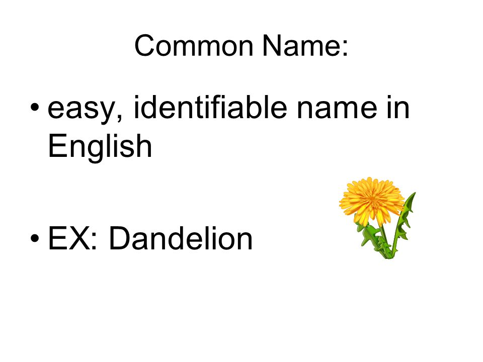 easy, identifiable name in English